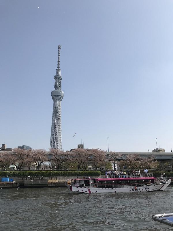 Cherry tree Cruise of Chiyoda