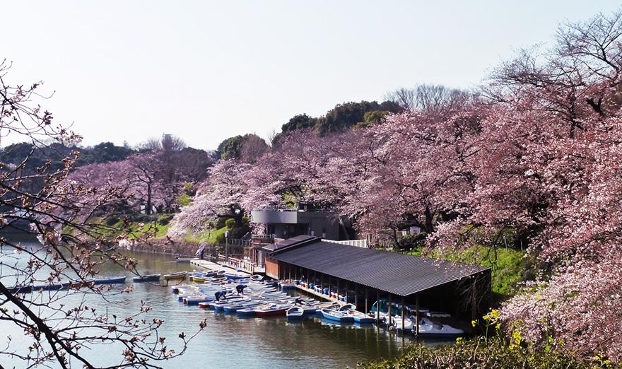 Iidabashi, Kudan, Ichigaya, Kitanomaru