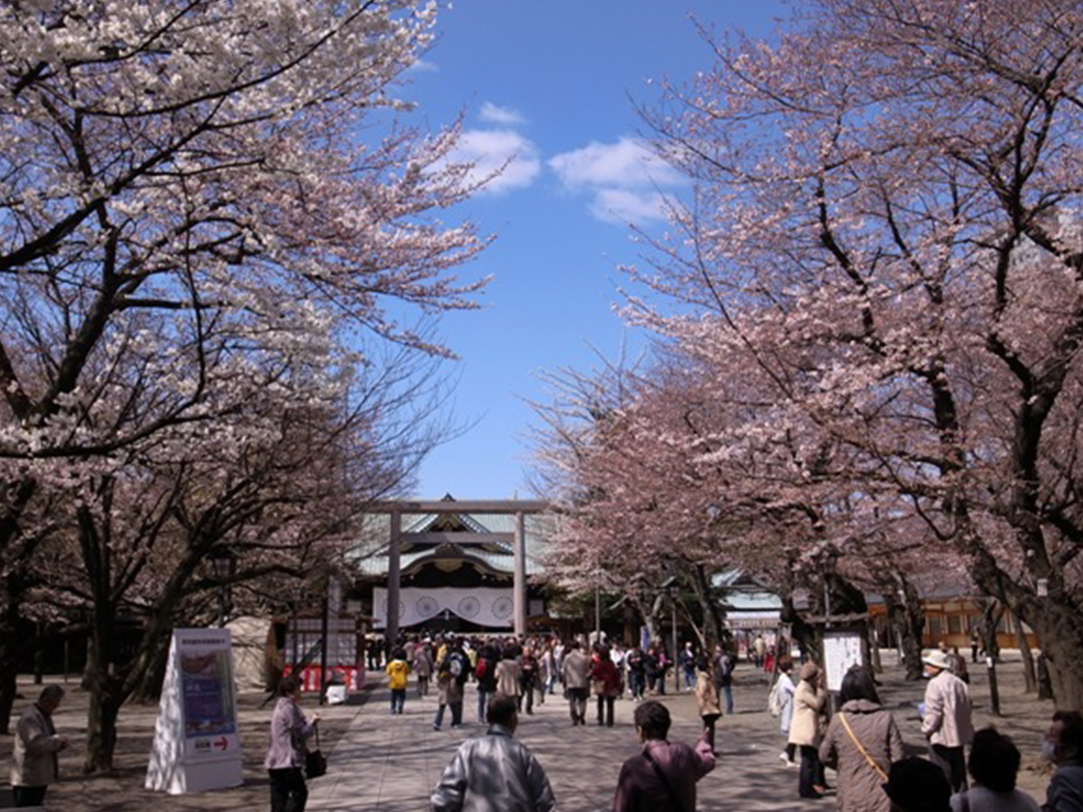Yasukuni Shrine, cherry tree