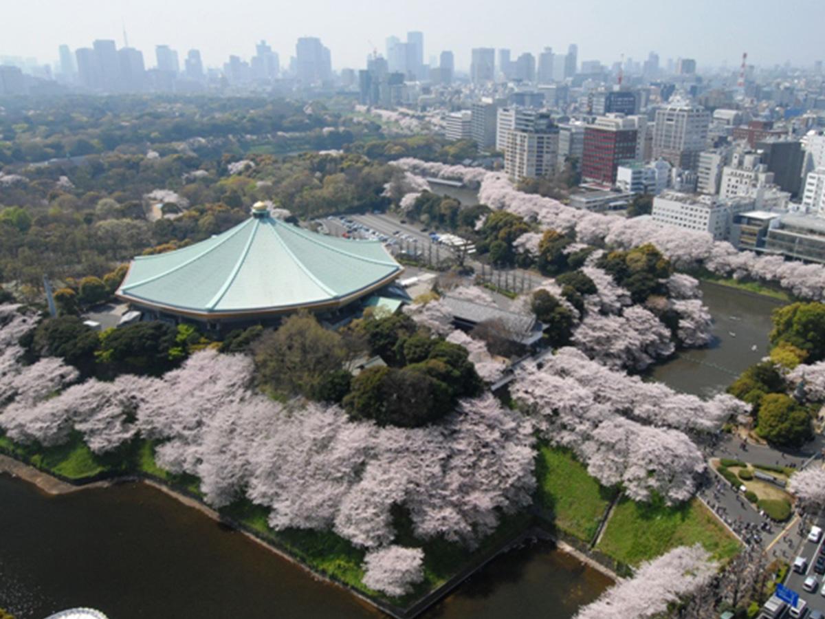 日本武蕓館、櫻花