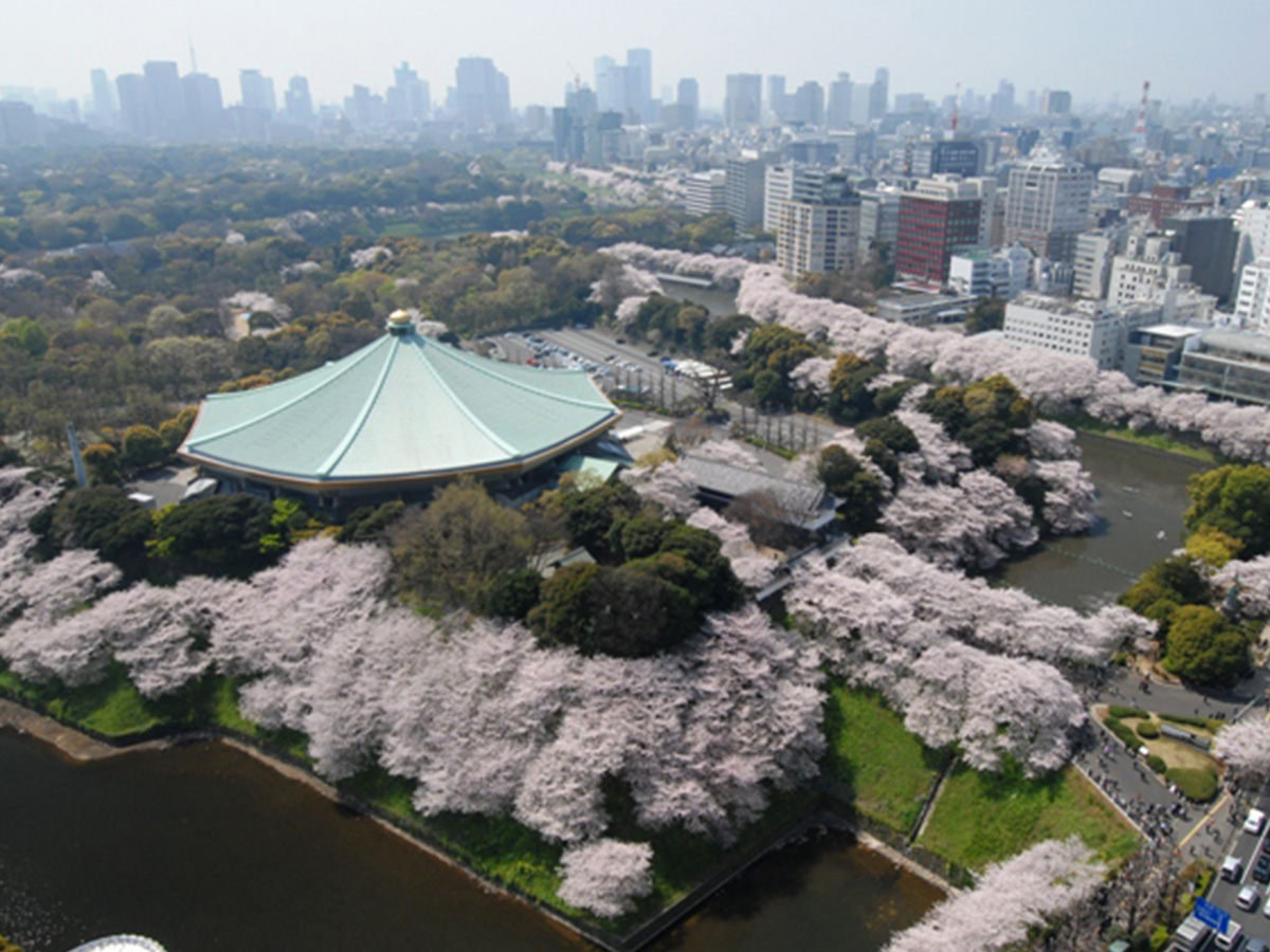 Nippon Budokan, cherry tree