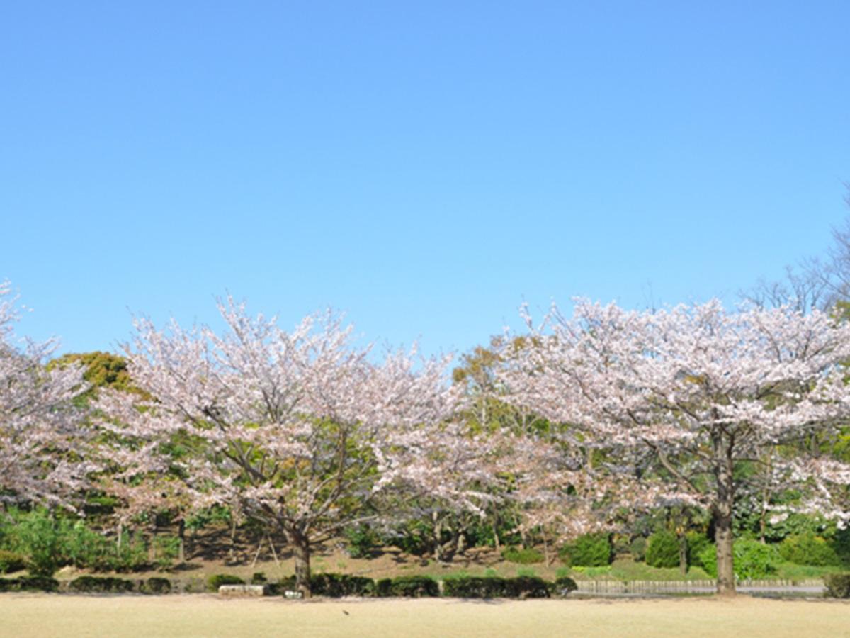 北丸公園、櫻花