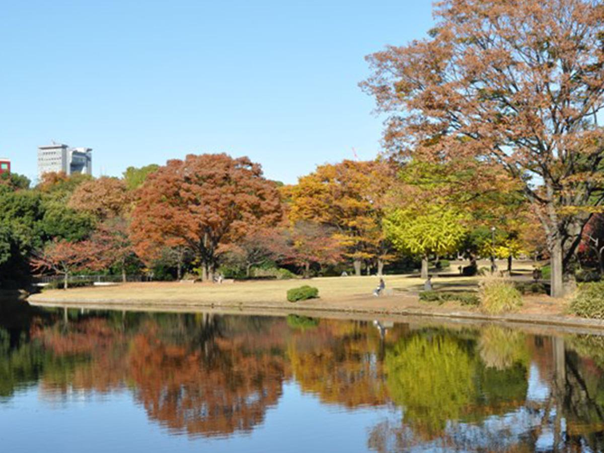 Kitanomaru-koen Park, colored leaves
