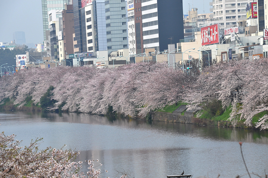 Kitanomaru-koen Park